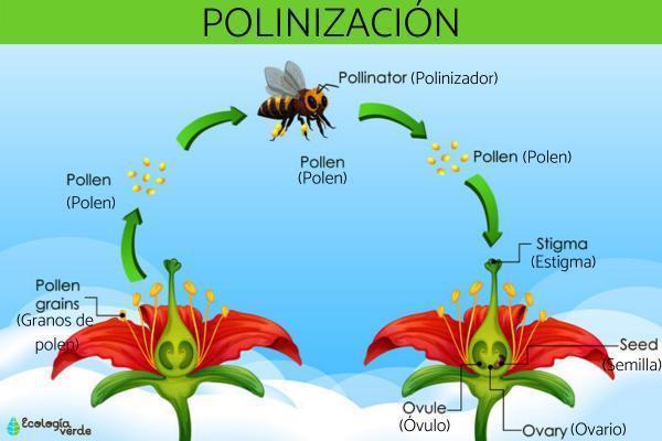 que_es_la_polinizacion_3256_0_600