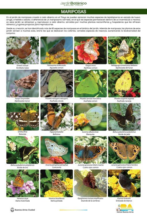 lamina-1-mariposas-nueva_4