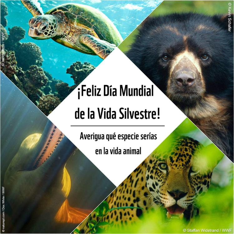 collage_dia_vida_silvestre_2018