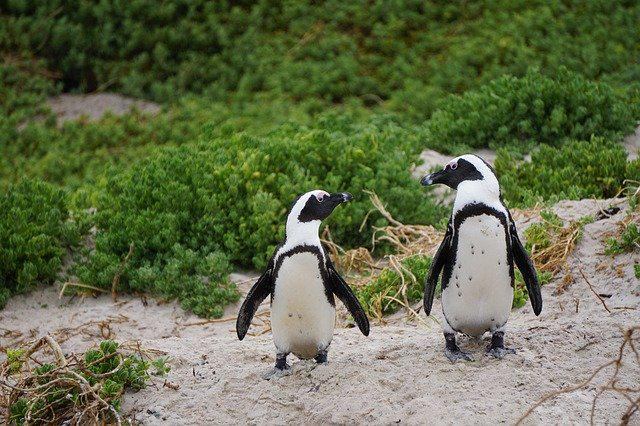 penguins-3994532_640