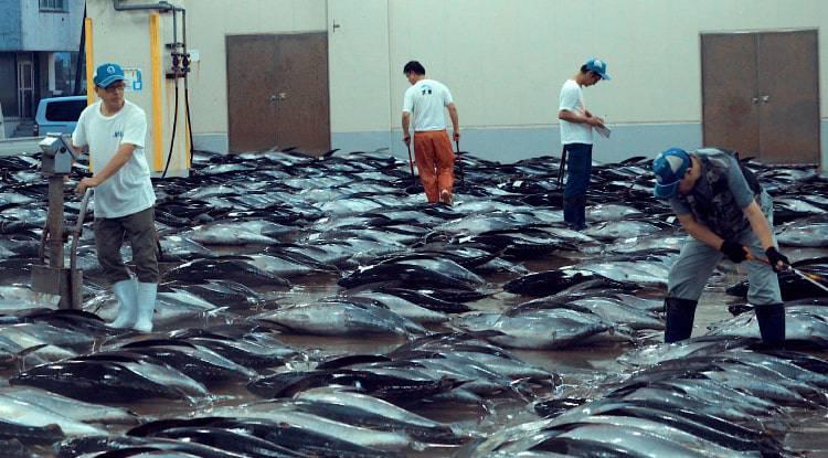 pesca_no_sostenible