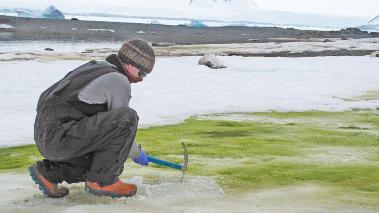 2-snow_algae_surface1_crop-2560x1440-1-740x416-1