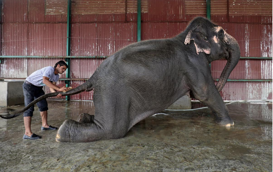 anushree-fadnavis-hospital-elefante